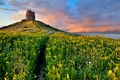 picture of old spanish trail  - spring flower field with trail to castle tower bright vivid colors bright yellow pasture colorful spring meadow fairy tale landscape yellow flowers with path leading to old ancient castle - JPG