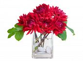 stock photo of flower arrangement  - red dahlia flowers in a vase with greenery  - JPG