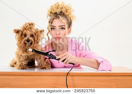 poster of Beauty Salon For Animals. Dog Salon. Grooming. Grooming Master Making Dog Hairstyle. Pet Grooming. A