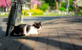 Cute Black And White Stray Cat Sitting And Sleeping Beside A Bicycle On Walkway In Public Park. poster