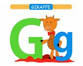 Letter G And Funny Cartoon Giraffe. Animals Alphabet A-z. Cute Zoo Alphabet In Vector For Kids Learn poster