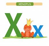 Letter X And Funny Cartoon Xenopus. Animals Alphabet A-z. Cute Zoo Alphabet In Vector For Kids Learn poster