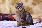 The Cat Is Sitting And Looking At The Camera. Cat Without Breed Of Gray. poster