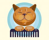 Cat  Grooming. Haircut, Combing And Grooming Pets poster