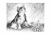 picture of stippling  - A playful calico kitten chases a butterfly  - JPG