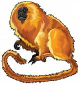 Sitting Golden Lion Tamarin