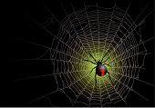 image of spider web  - Halloween spider web background - JPG