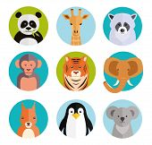 picture of cute tiger  - Cute vector cartoon animals in colored round badges with a panda  giraffe  raccoon  monkey  tiger  elephant  squirrel  penguin and koala - JPG