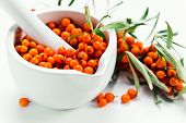 ������, ������: Sea buckthorn Berries