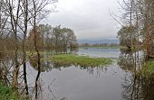 picture of marshes  - Flooded Ljubljana marsh after a heavy rain - JPG