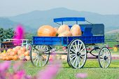 picture of wagon  - Blue wagon full of pumpkins in farm - JPG