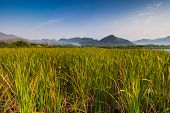 picture of bulrushes  - Mountain and sky view at reservoir that full with bulrush or Cat - JPG