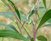 pic of jungle snake  - Green snake on tree close up shot - JPG