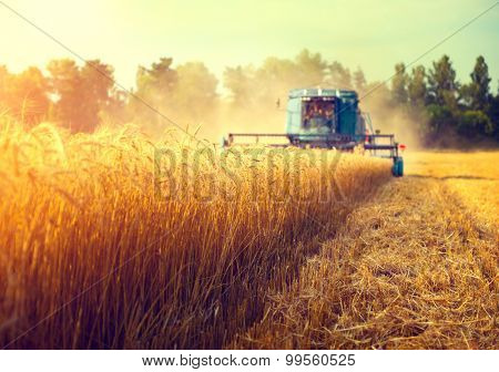poster of Harvester machine to harvest wheat field working. Combine harvester agriculture machine harvesting g