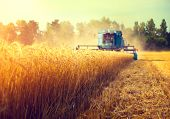 Harvester machine to harvest wheat field working. Combine harvester agriculture machine harvesting g poster