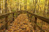Постер, плакат: Autumn Forest Path