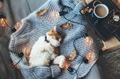 Lazy cat is sleeping on soft woolen sweater on sofa, decorated with led lights. Winter or autumn wee poster