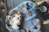 Lazy cat sleeps and yawns on soft woolen sweater on sofa, decorated with led lights. Winter or autum poster