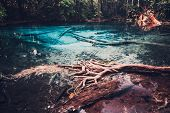 Sra Morakot Blue Pool at Krabi Province, Thailand. Clear emerald pond in tropical forest. The roots  poster