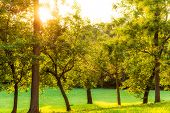 Summer Trees On Hill In Washington Dc Park During Sunset With Sun Burst Or Glade And Rays In 23Rd An poster