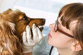 Veterinarian Checks Teeth To A Dog poster