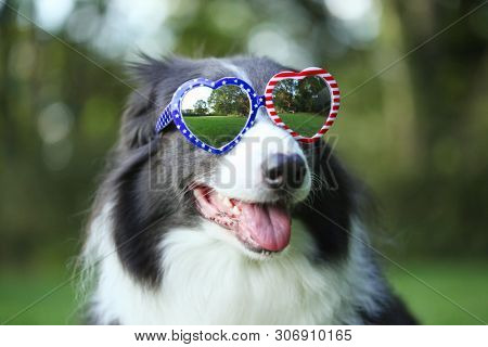 poster of Border collie dog wearing heart shaped American flag sunglasses for 4th of July