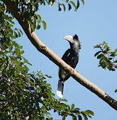 image of full cheeks  - a female bird named  - JPG