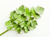 Lovage On White poster