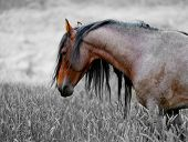 An American wild mustang. Loneliness is an unpleasant feeling in which a person (or animal) feels a
