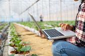 Agronomists And Farmers Are Inspecting Plants In A Greenhouse Farm With A Laptop, Farmers And Resear poster