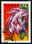 stock photo of schlumbergera  - a stamp printed in the Tanzania shows Schlumbergera Orssighiana - JPG