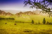pic of mongol  - Yourt Camp in Terelj National Park Mongolia with green meadows and animals - JPG