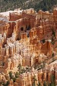 Needles in Bryce Canyon National Park, Utah, Usa