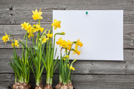 picture of daffodils  - Message and spring daffodils against wooden background - JPG