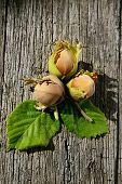 picture of hazelnut tree  - Three hazelnuts on wooden background freshly picked from a tree  - JPG
