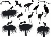 stock photo of stork  - illustration with storks and cranes isolated on white background - JPG