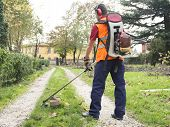 picture of trimmers  - Man Working With Hedge Trimmer in a garden - JPG