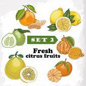 picture of pomelo  - Set 2 Fresh citrus fruits of lemon mineola clementine pomelo bergamot and mandarin - JPG