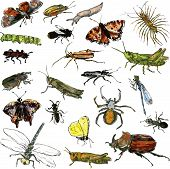 stock photo of insect  - set of watercolor drawing insects - JPG