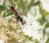 image of summer insects  - insects on FLOWER italy SARDINIA summer 2014 - JPG