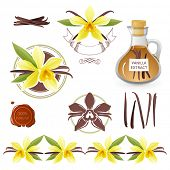 image of vanilla  - Design elements with vanilla flowers - JPG
