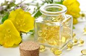 foto of primrose  - natural supplement capsules with evening primrose flowers - JPG