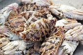 stock photo of cooked blue crab  - fresh crab in the market for cooking - JPG