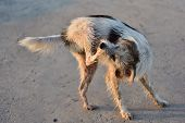 picture of stray dog  - a stray dog on the street in Thailand - JPG