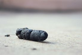 picture of feces  - Dog feces on the floor of cement - JPG