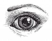 pic of eyebrows  - Black and white drawing of eye and eyebrow  - JPG