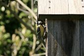 stock photo of tit  - Photography of a tit in a bird house, in a garden