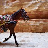 stock photo of petra jordan  - Horse and cart speeding through the Siq canyon in Petra Jordan - JPG