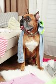 picture of messy  - Dog demolishes clothes in messy room - JPG