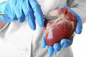 picture of scalpel  - Doctor holding heart organ and scalpel close up - JPG